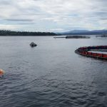 "CANFLEX ""Sea Slug"" 250 m3 OCEAN TOWABLE BLADDER used at Fish Farm"